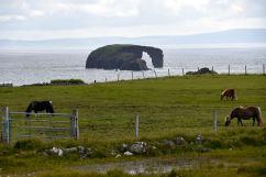 The drinking horse, norra Shetland