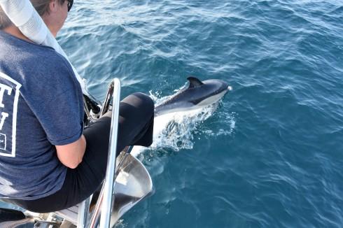 Delfinspaning