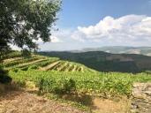 Vinodling i Dourodalen