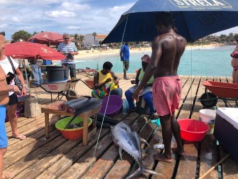 Nyfångad tonfisk
