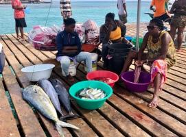 Nyfångade fiskar