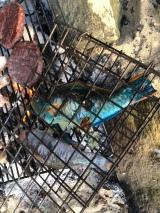 Papegojfisk på grillen