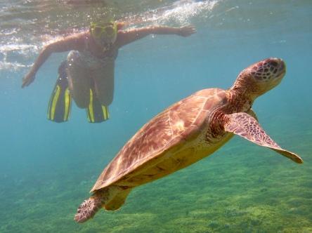 Cecilia och en sköldpadda (Cecilia till vänster)