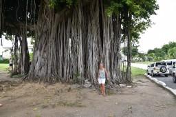 Träd i botaniska trädgården
