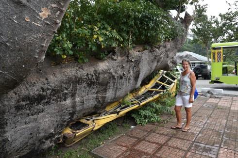 Skolbuss som träffades av ett träd under orkan 1979