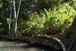 Fina blommor längs floden