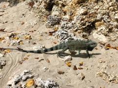 En kompis på stranden