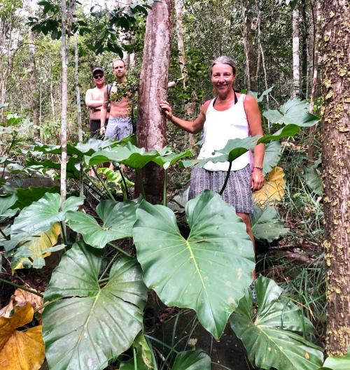 Cecilia i djungeln