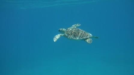 En av alla sköldpaddor
