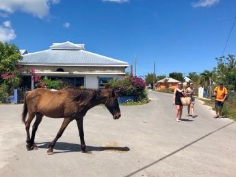 Hästar går fritt på gatorna