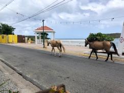 Hästar går på gatorna