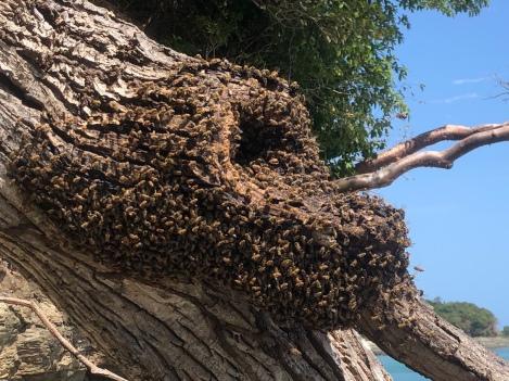 En honungsgömma