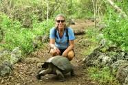 Landsköldpadda mitt i vägen