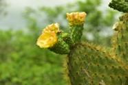 Fina blommor på taggig växt