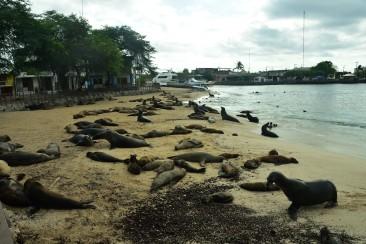Sjölejonen gillar att slöa på stranden