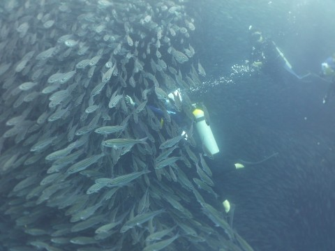 Ett stort fiskstim