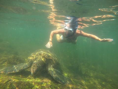 Cecilia och havsköldpadda