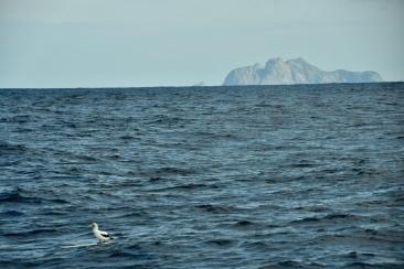 Surfande sula vid Isla Malpena